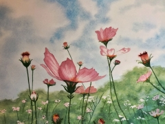 Cosmos Field by Julie Iveson - watercolour