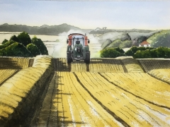 August Harvest Time in Suffolk. The golden fields and farmers busy at work